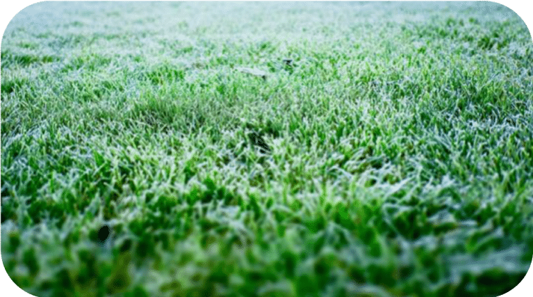Winter Garden Care for Artificial Grass | The Grassman